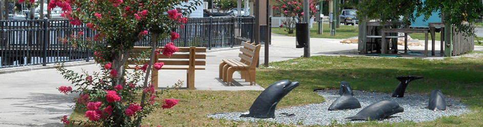 """Where the Wild Things Live"":  Turtles"